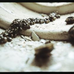 Smykker i gammel vinduskarm
