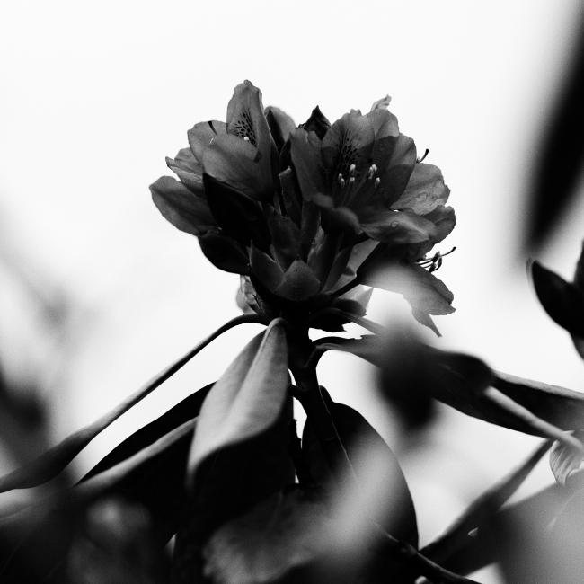 Blomst i S/H, lite dybdeskarphet