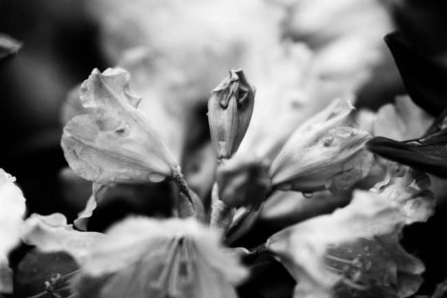Bilde av knopp blant blomster
