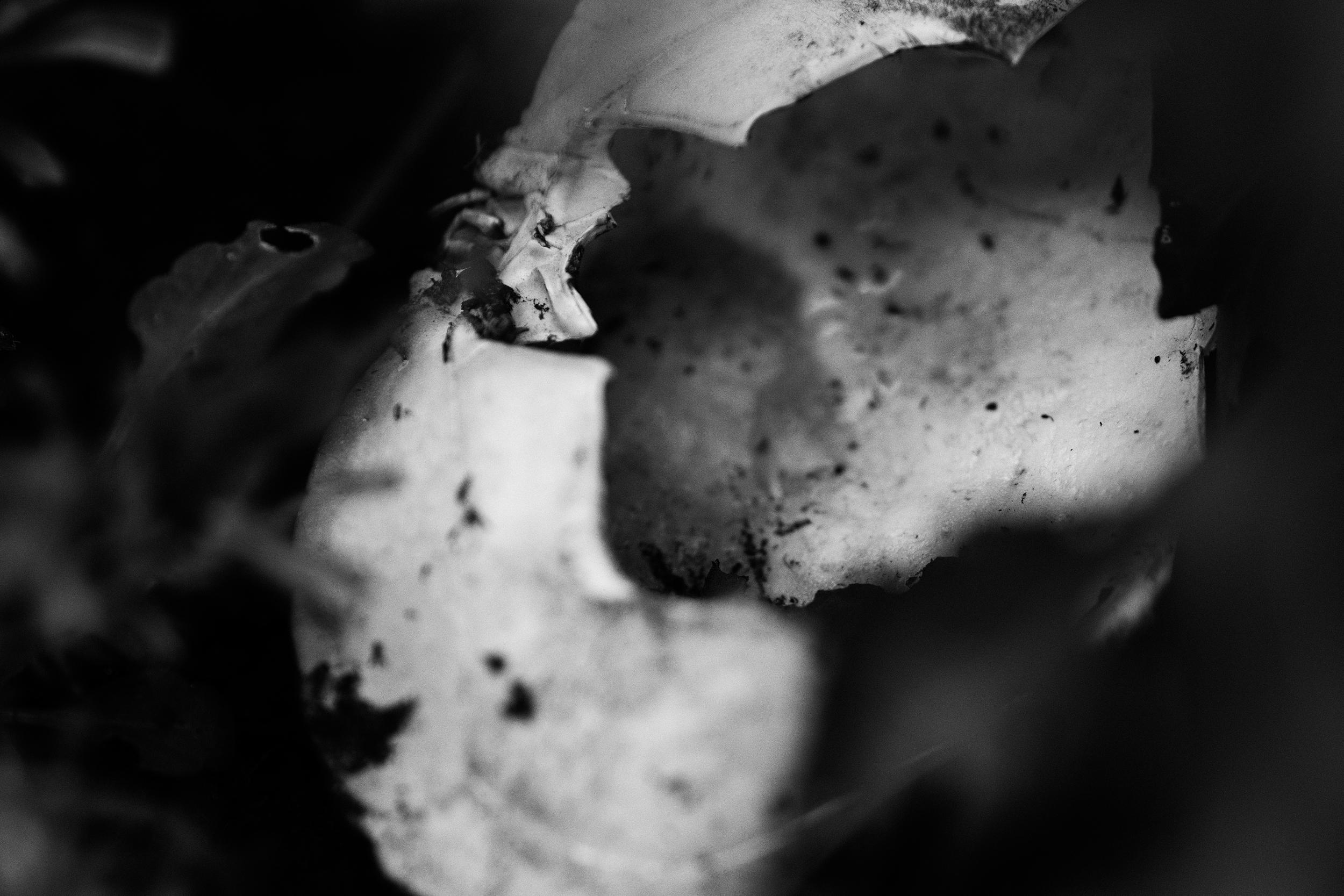 Krabbeskjell liggende i et bed
