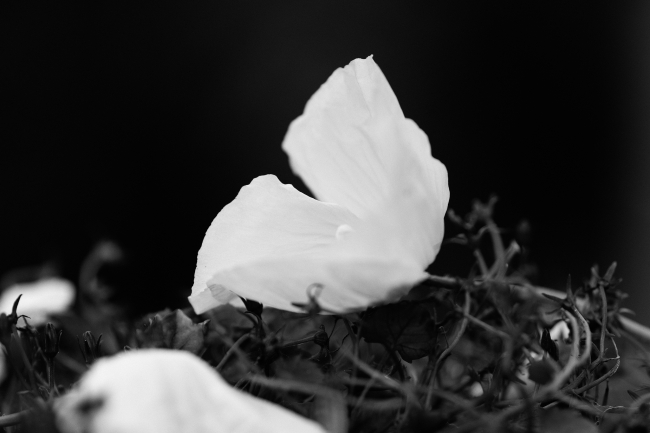 Blomst liggende blant hageavfall