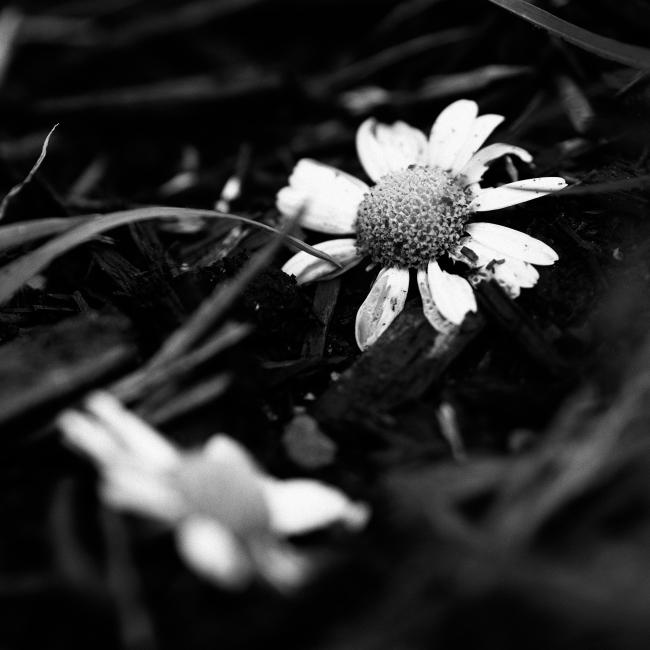 Blomster liggende blant hageavfall
