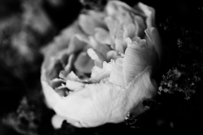 Nærbilde av blomst, lite dybdeskarphet